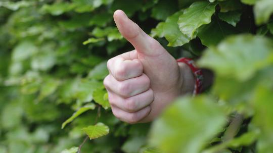 Hand emerging from vine gives thumbs up