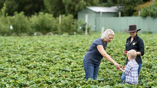 Kelly and her son collecting strawberries.